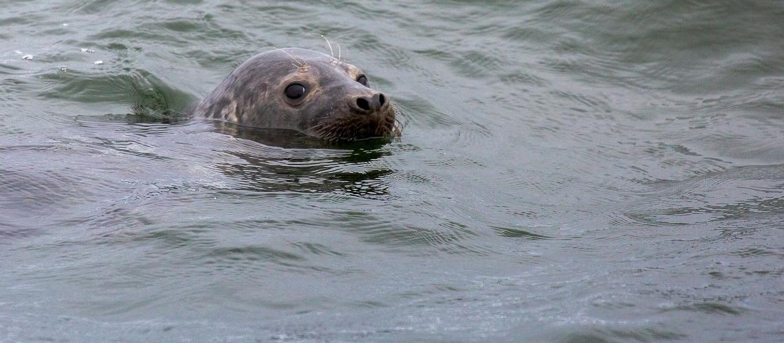 How to spot a seal in Estonia?