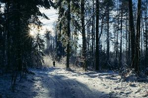 Voore Tallid – exciting sleigh ride in the magical forest surrounding Varbola stronghold