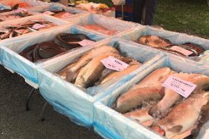 A large selection of fresh fish