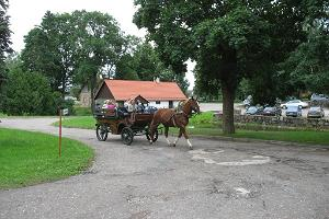 Horse cart ride in the park